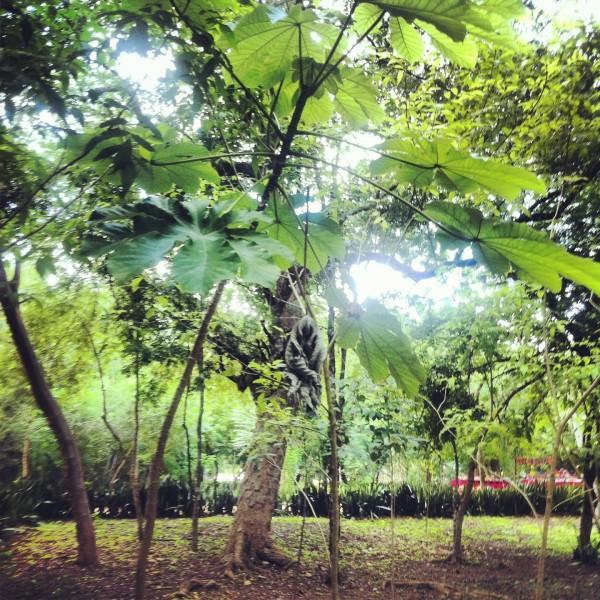 Selva Dschungel Yucatan Mexiko